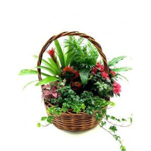 αποστολή λουλουδιών fytokosmos